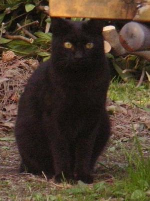 黒猫.JPG